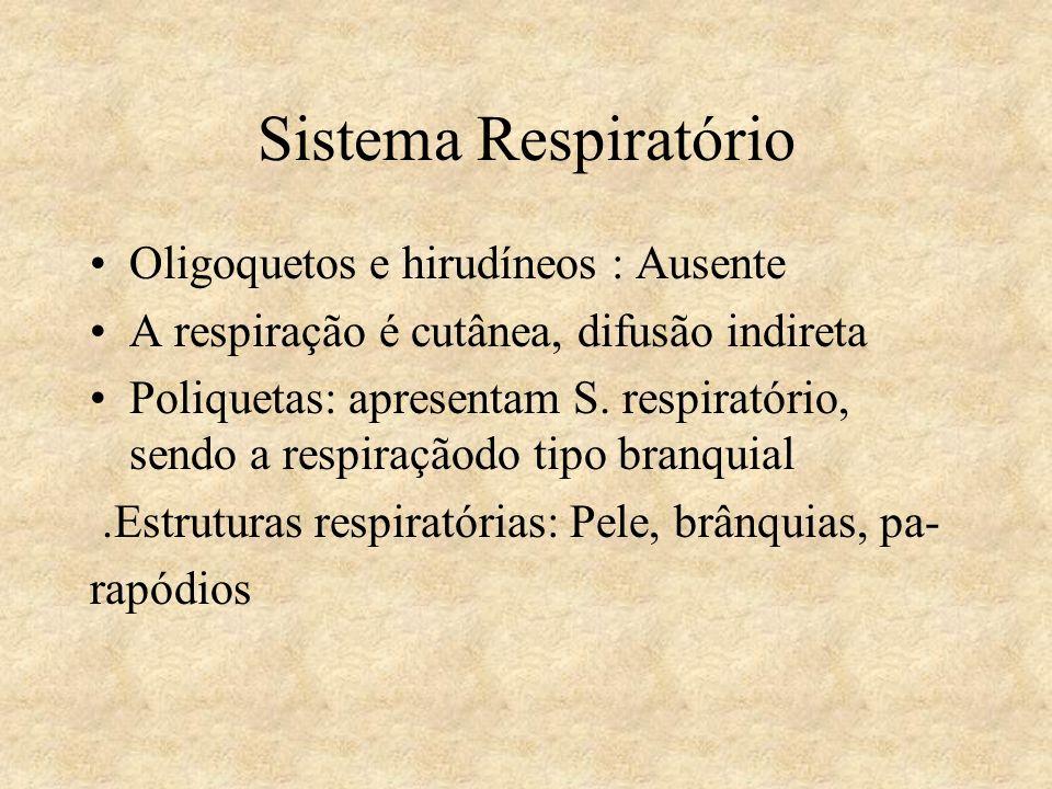Sistema Respiratório Oligoquetos e hirudíneos : Ausente