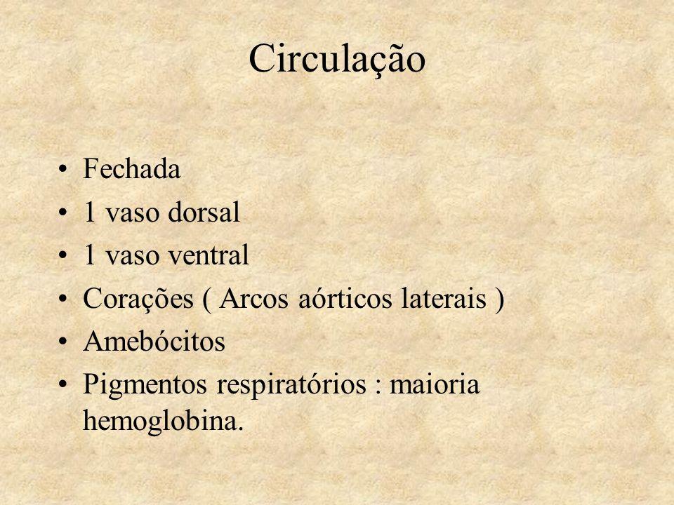 Circulação Fechada 1 vaso dorsal 1 vaso ventral
