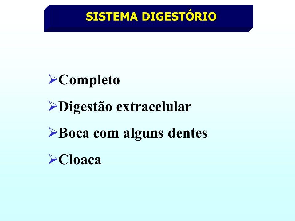 Digestão extracelular Boca com alguns dentes Cloaca