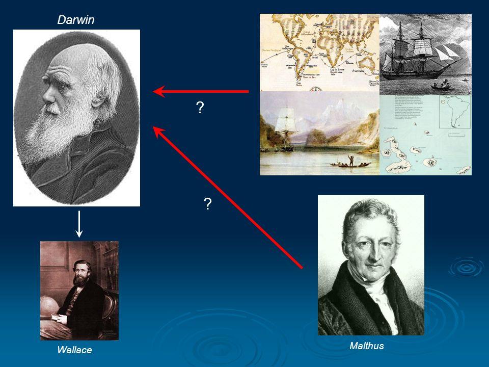 Darwin Malthus Wallace