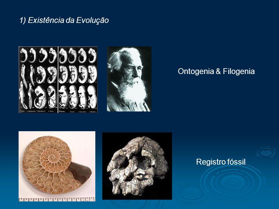 1) Existência da Evolução