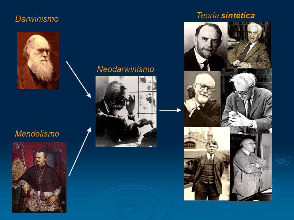 Teoria sintética Darwinismo Neodarwinismo Mendelismo