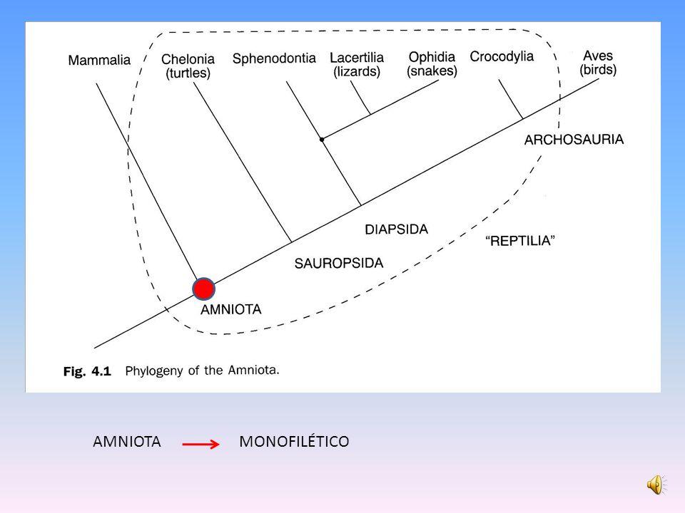 AMNIOTA MONOFILÉTICO