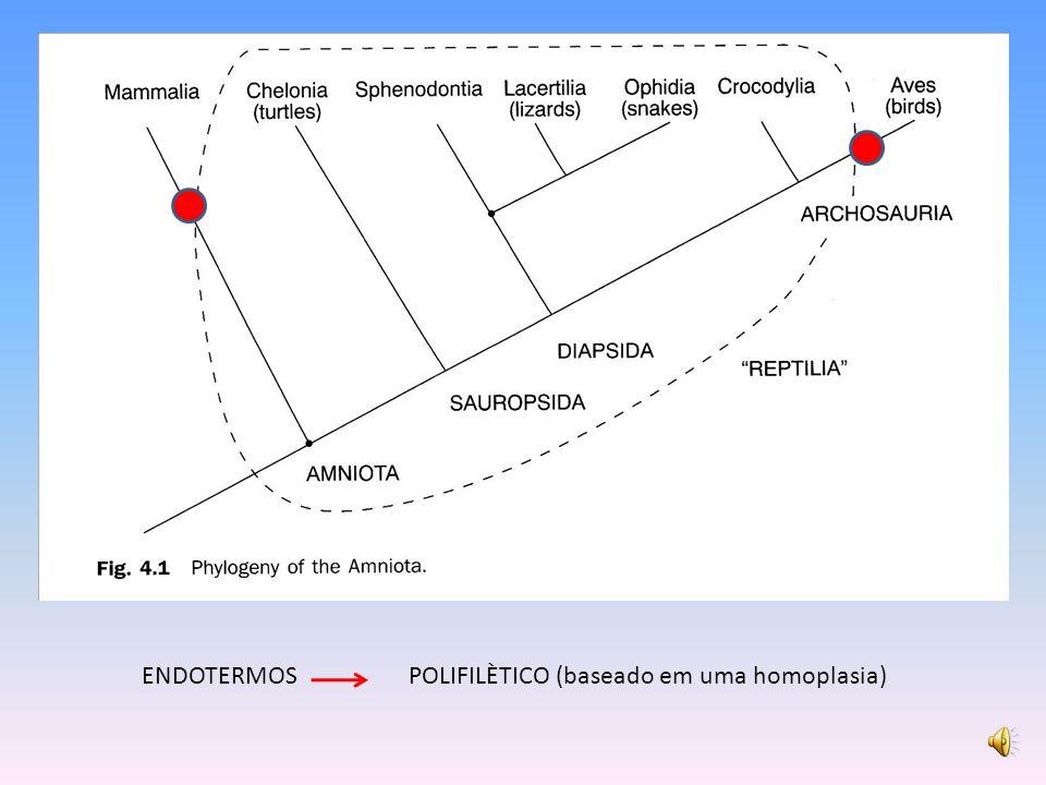 ENDOTERMOS POLIFILÈTICO (baseado em uma homoplasia)