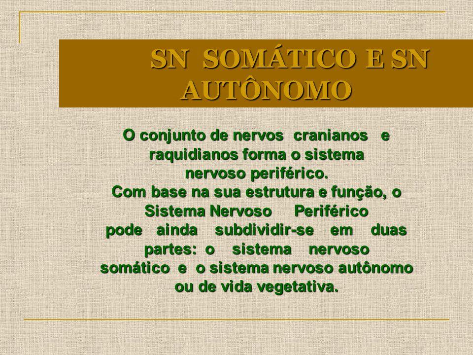SN SOMÁTICO E SN AUTÔNOMO