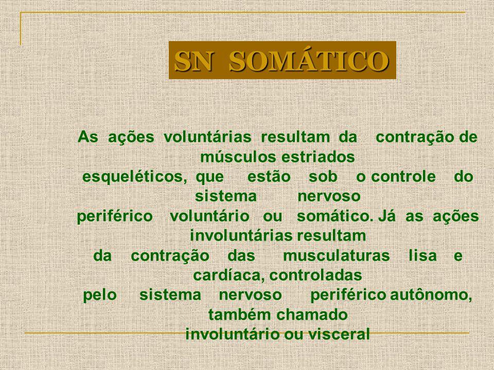 SN SOMÁTICOAs ações voluntárias resultam da contração de músculos estriados.