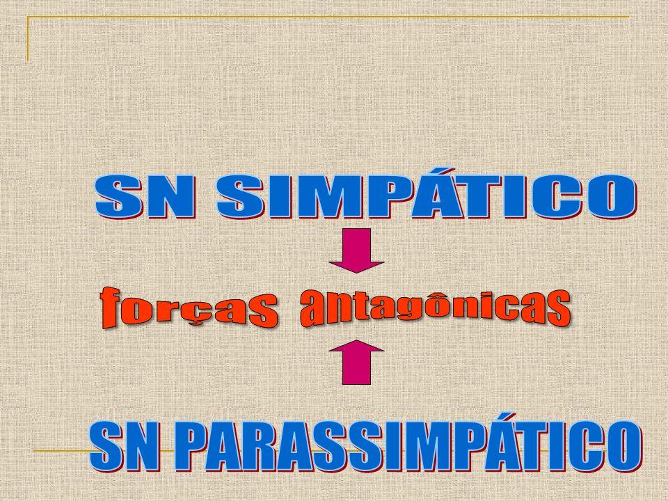 SN SIMPÁTICO antagônicas forças SN PARASSIMPÁTICO