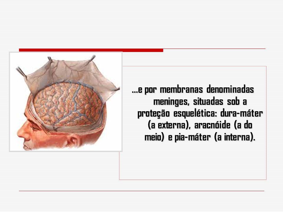 ...e por membranas denominadas meninges, situadas sob a proteção esquelética: dura-máter (a externa), aracnóide (a do meio) e pia-máter (a interna).