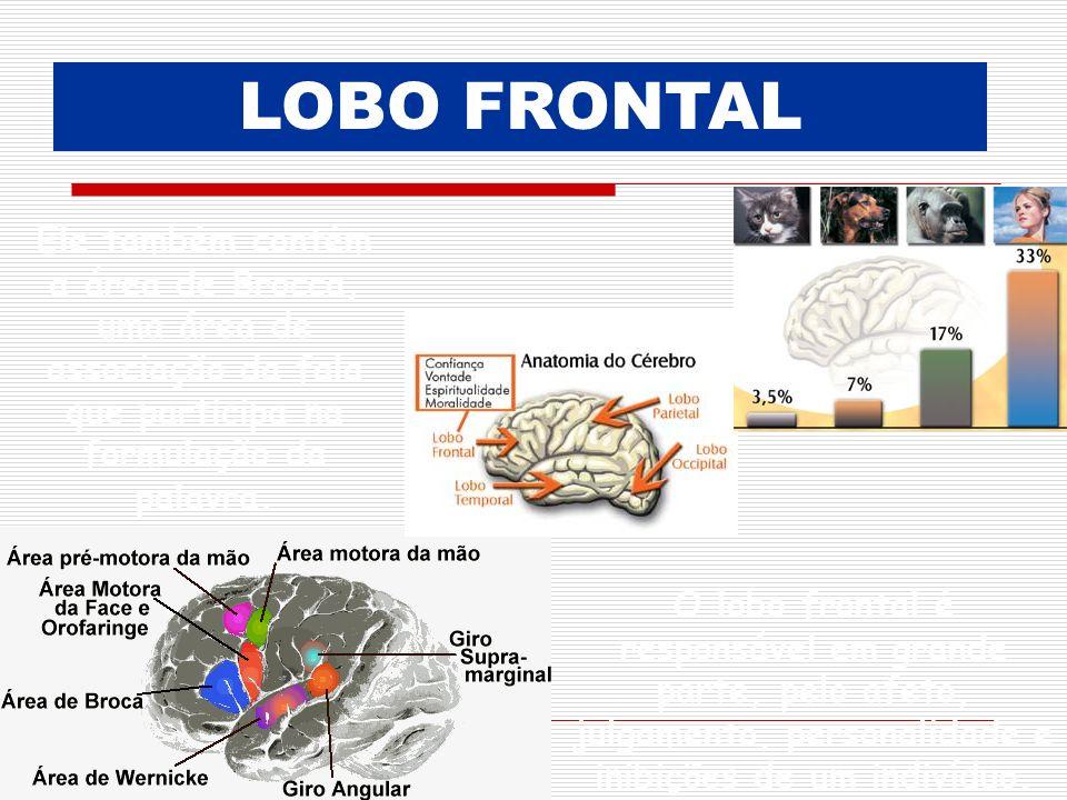 LOBO FRONTAL Ele também contém a área de Brocca, uma área de associação da fala que participa na formulação da palavra.