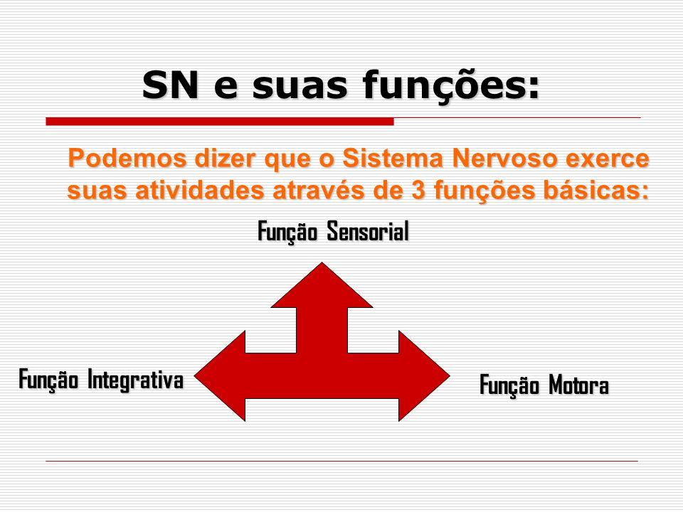 SN e suas funções: Podemos dizer que o Sistema Nervoso exerce suas atividades através de 3 funções básicas:
