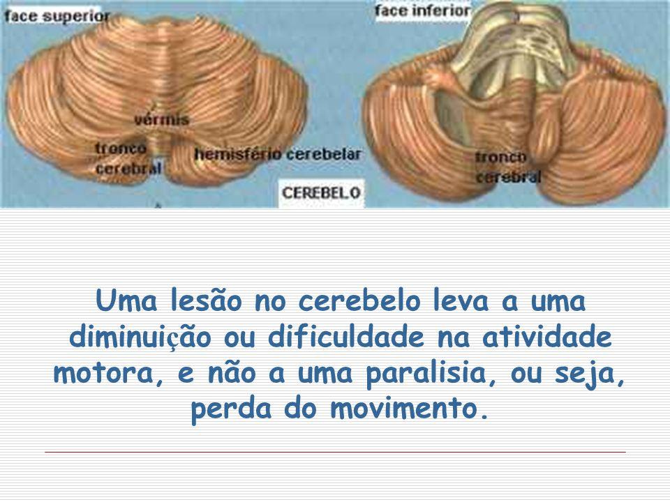 Uma lesão no cerebelo leva a uma diminuição ou dificuldade na atividade motora, e não a uma paralisia, ou seja, perda do movimento.