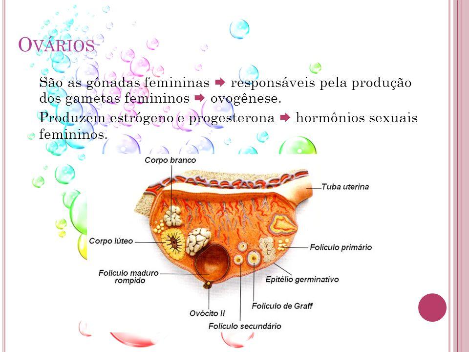 Ovários São as gônadas femininas  responsáveis pela produção dos gametas femininos  ovogênese.
