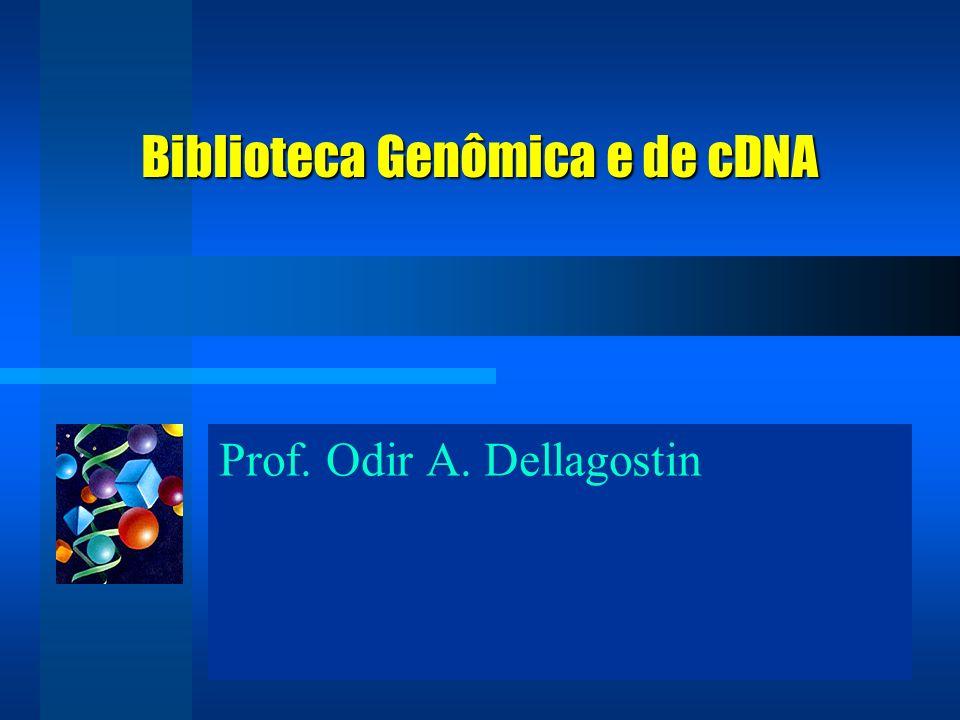 Prof. Odir A. Dellagostin