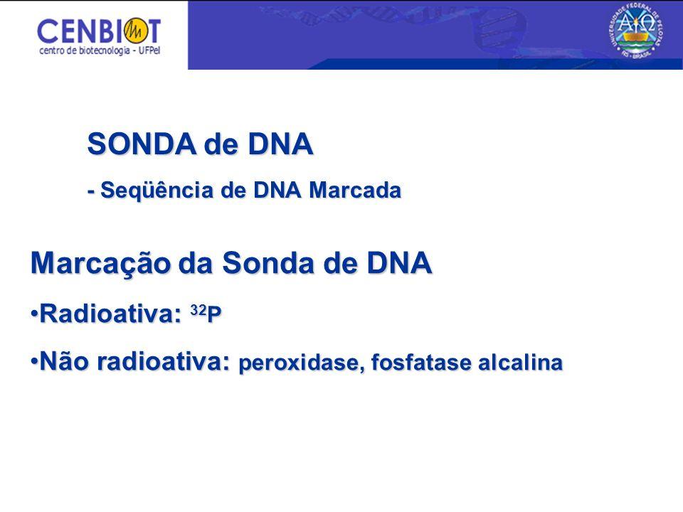 Marcação da Sonda de DNA