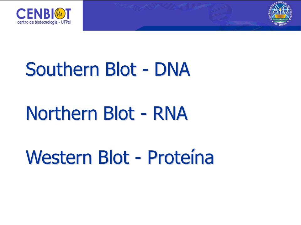 Southern Blot - DNA Northern Blot - RNA Western Blot - Proteína