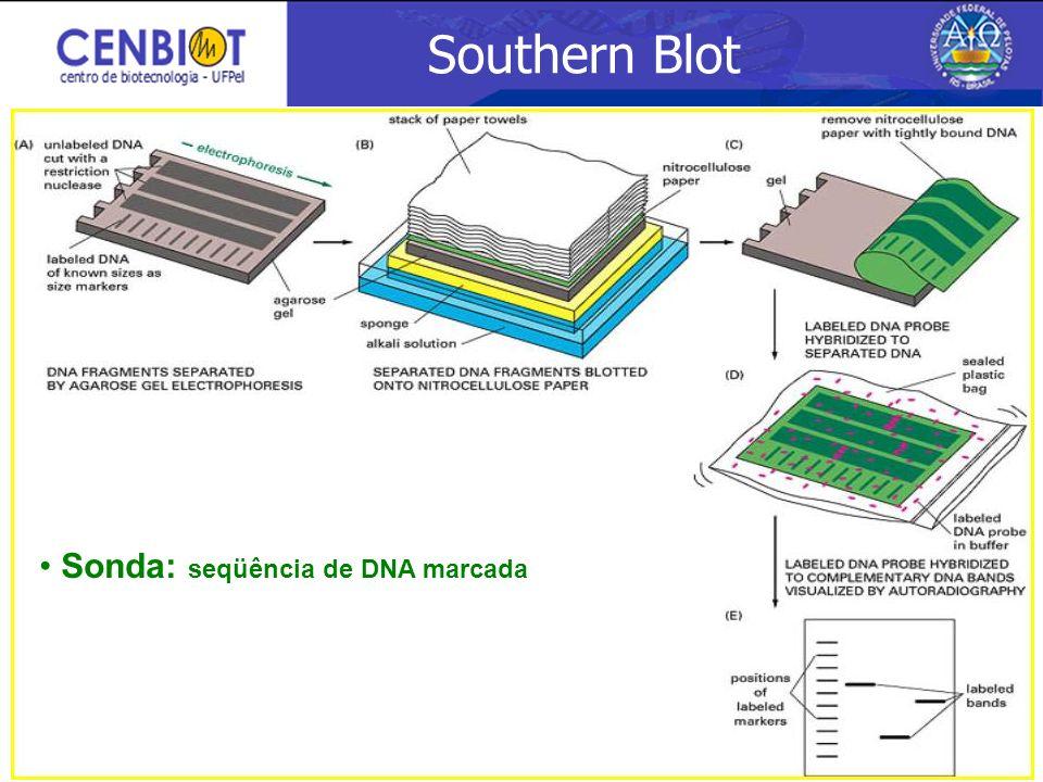 Southern Blot Sonda: seqüência de DNA marcada