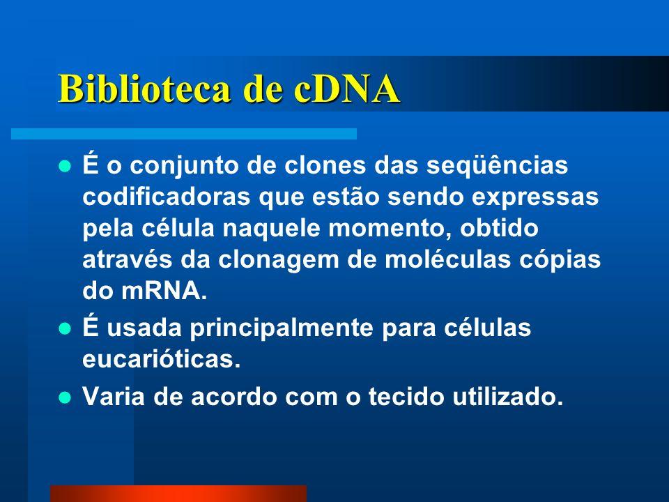 Biblioteca de cDNA