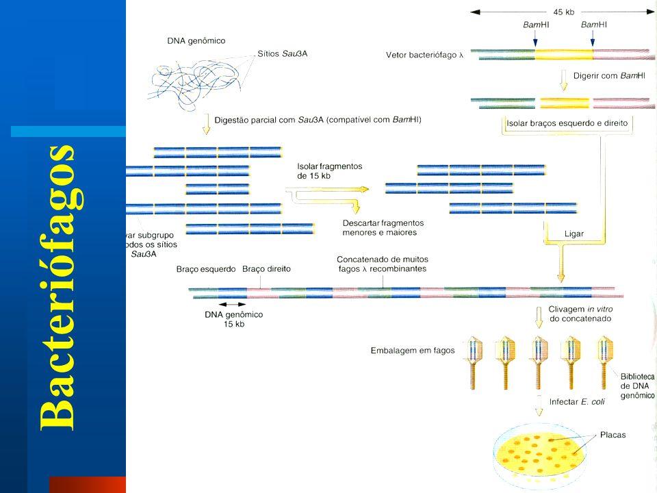 Bacteriófagos Bacteriófagos