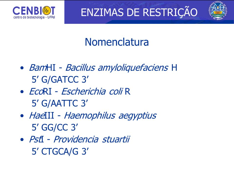 ENZIMAS DE RESTRIÇÃO Nomenclatura BamHI - Bacillus amyloliquefaciens H