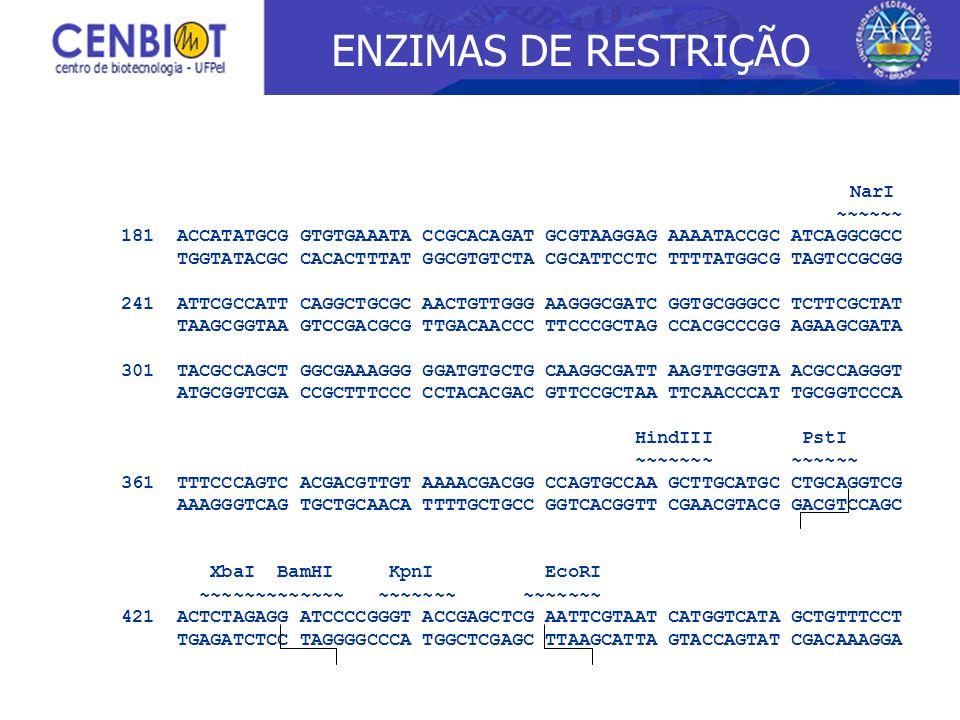 ENZIMAS DE RESTRIÇÃO ~~~~~~