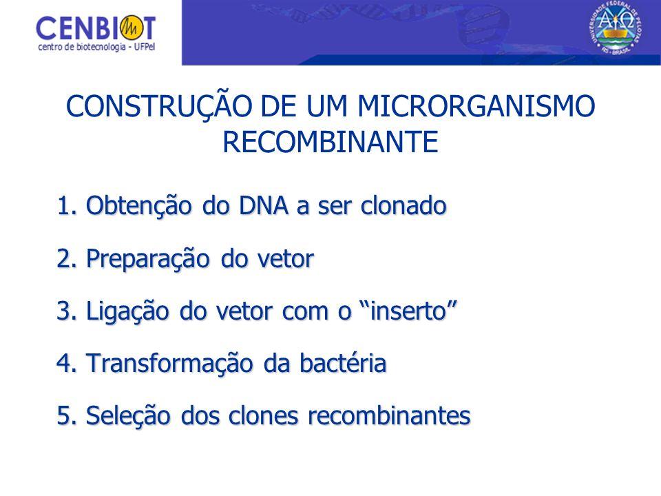 CONSTRUÇÃO DE UM MICRORGANISMO RECOMBINANTE