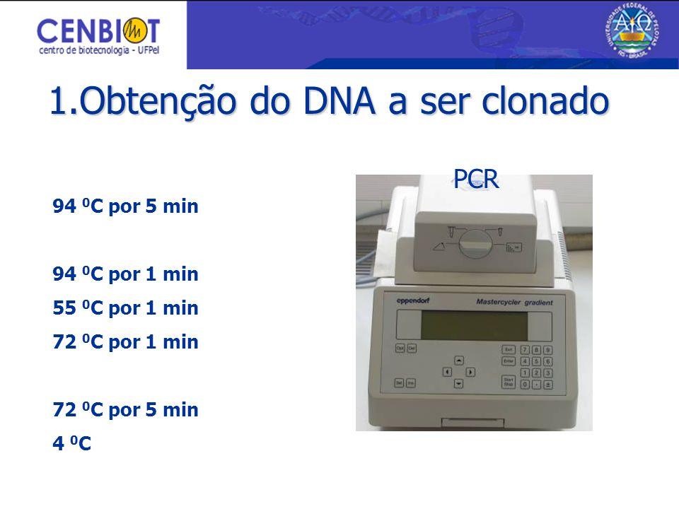 1.Obtenção do DNA a ser clonado