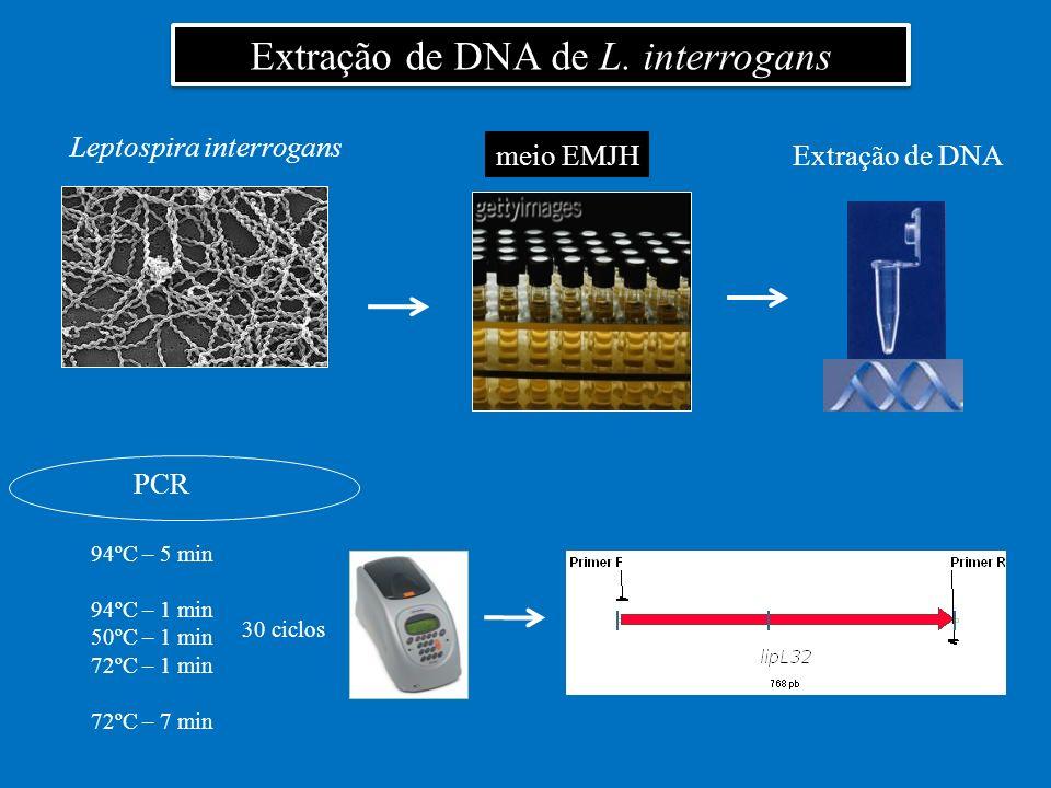 Extração de DNA de L. interrogans