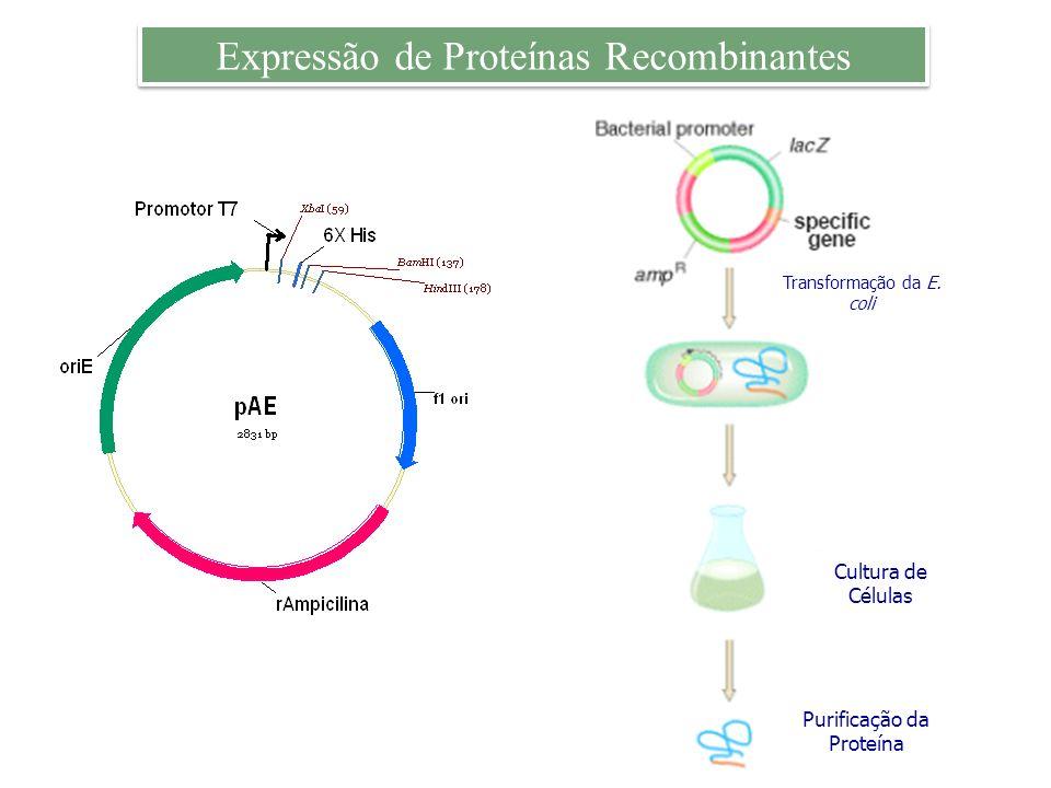 Expressão de Proteínas Recombinantes