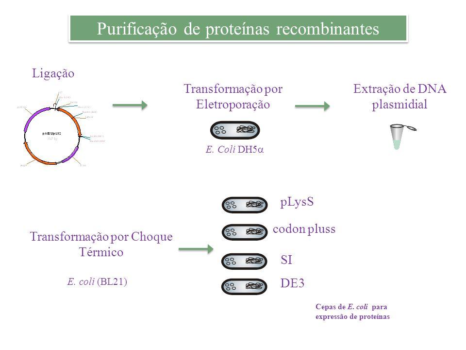 Purificação de proteínas recombinantes