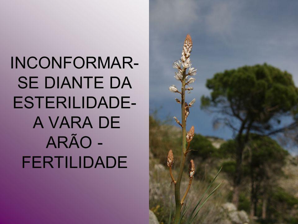INCONFORMAR-SE DIANTE DA ESTERILIDADE- A VARA DE ARÃO - FERTILIDADE