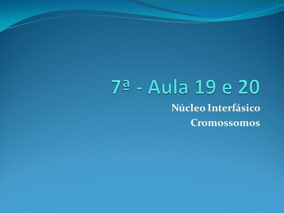 Núcleo Interfásico Cromossomos