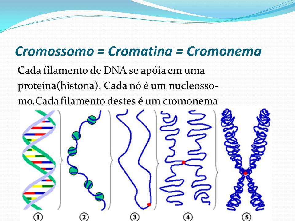 Cromossomo = Cromatina = Cromonema
