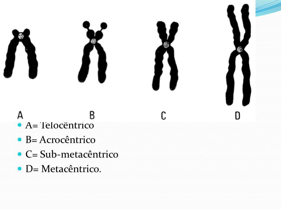Classificação dos Cromossomos