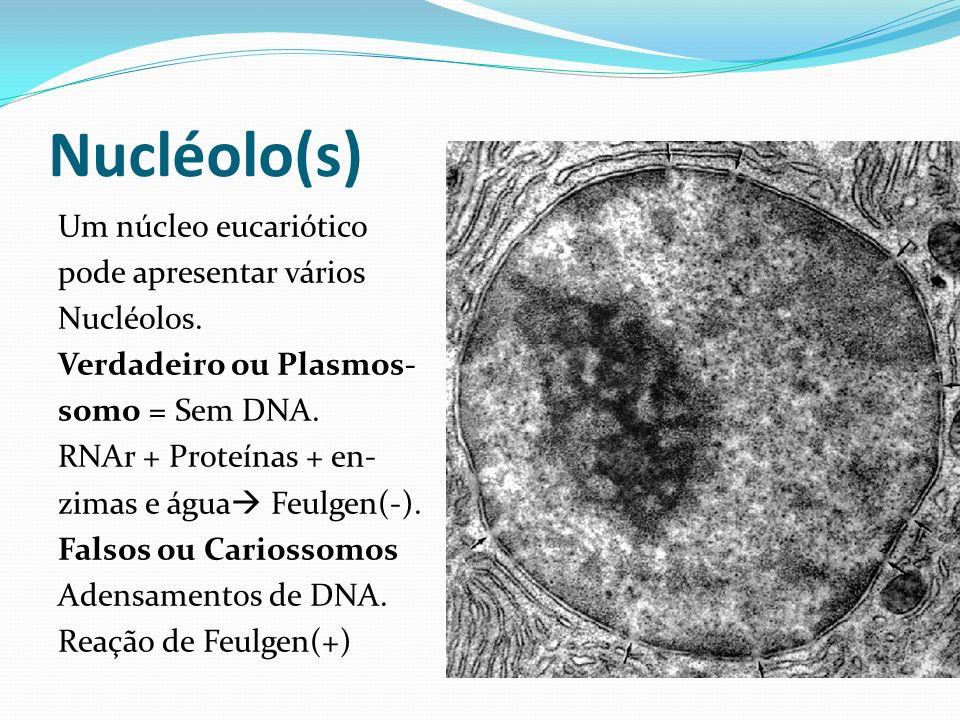 Nucléolo(s)