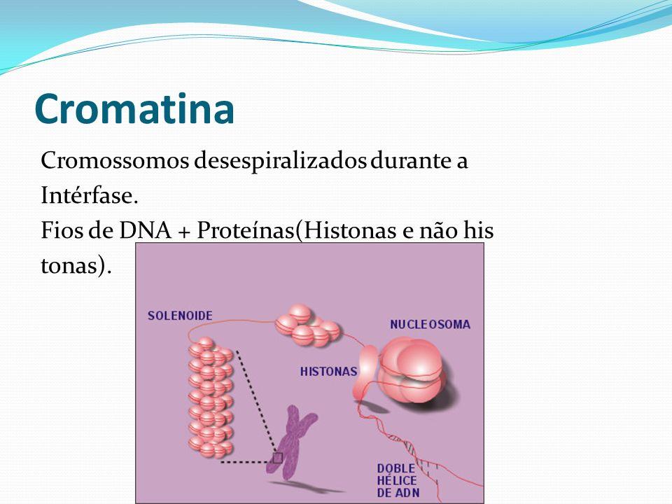 CromatinaCromossomos desespiralizados durante a Intérfase.