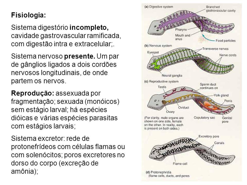 Fisiologia: Sistema digestório incompleto, cavidade gastrovascular ramificada, com digestão intra e extracelular;.