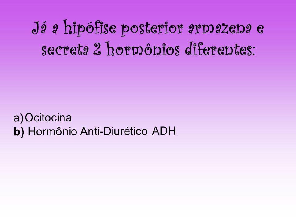 Já a hipófise posterior armazena e secreta 2 hormônios diferentes: