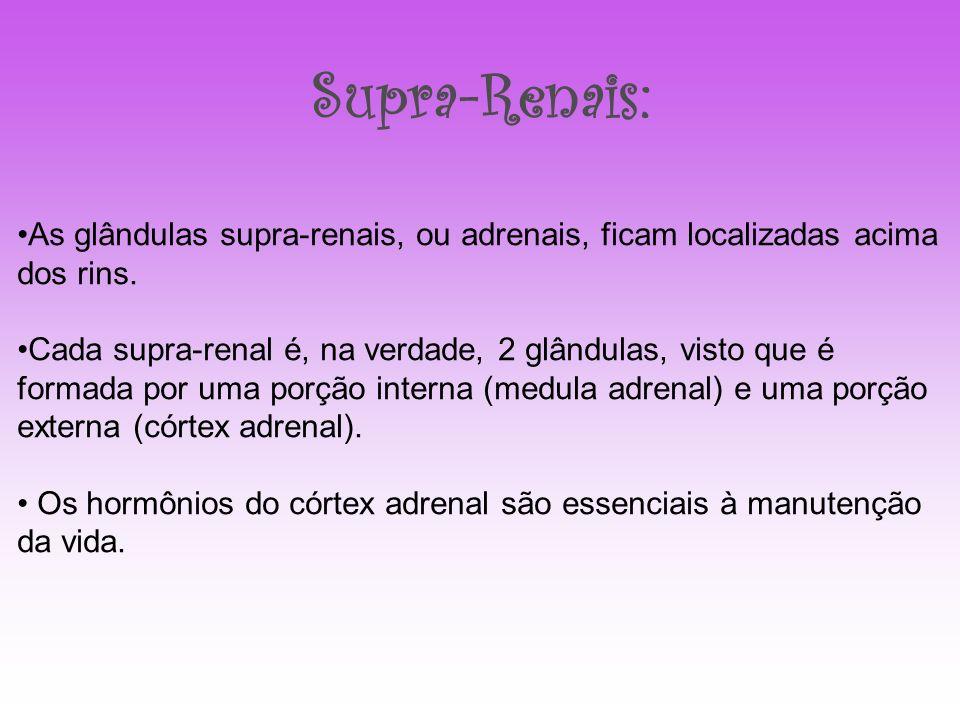 Supra-Renais: As glândulas supra-renais, ou adrenais, ficam localizadas acima dos rins.