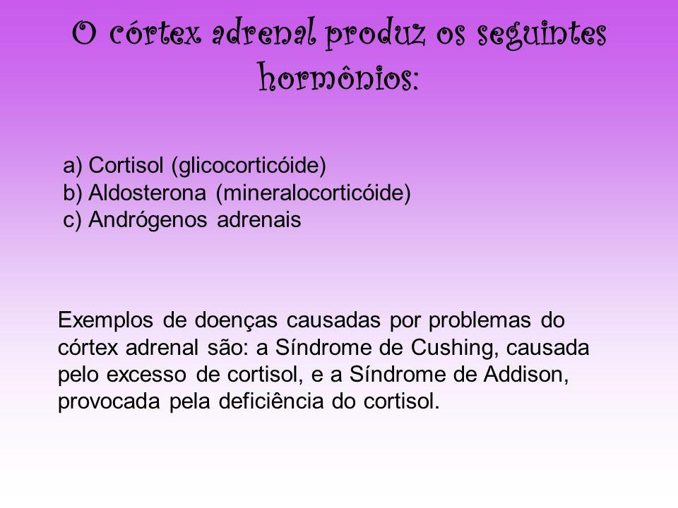 O córtex adrenal produz os seguintes hormônios: