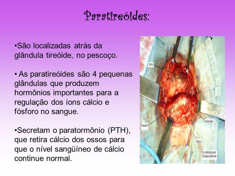 Paratireóides: São localizadas atrás da glândula tireóide, no pescoço.