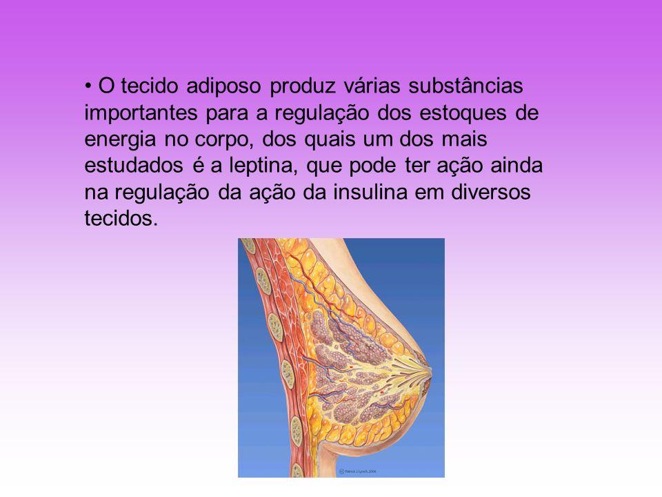 O tecido adiposo produz várias substâncias importantes para a regulação dos estoques de energia no corpo, dos quais um dos mais estudados é a leptina, que pode ter ação ainda na regulação da ação da insulina em diversos tecidos.