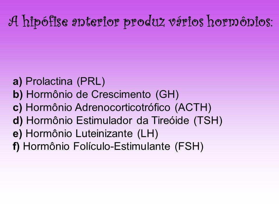 A hipófise anterior produz vários hormônios: