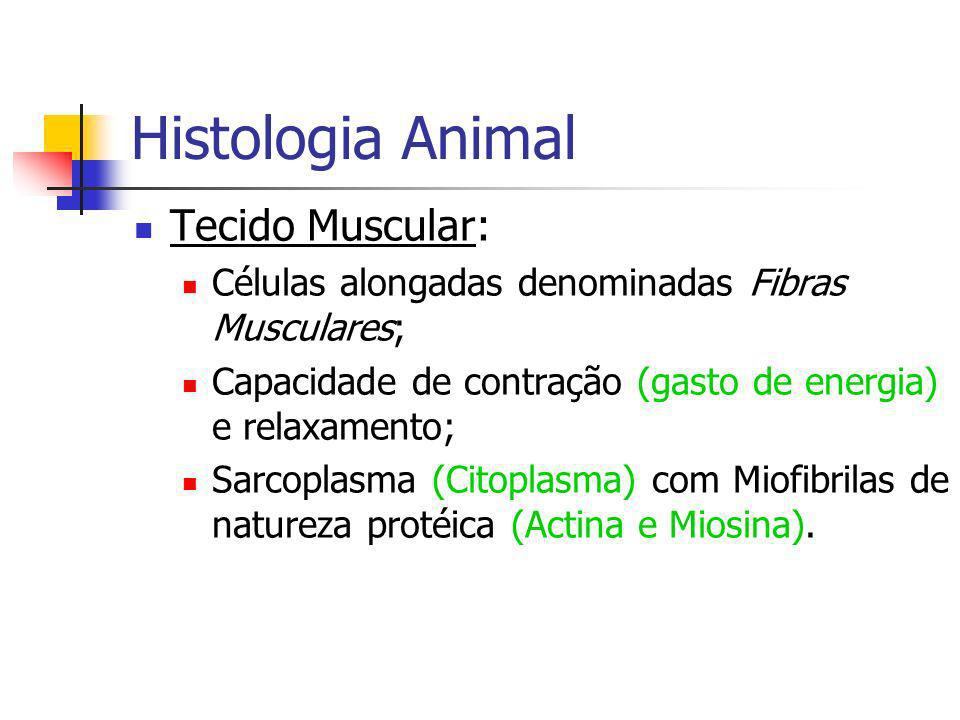 Histologia Animal Tecido Muscular: