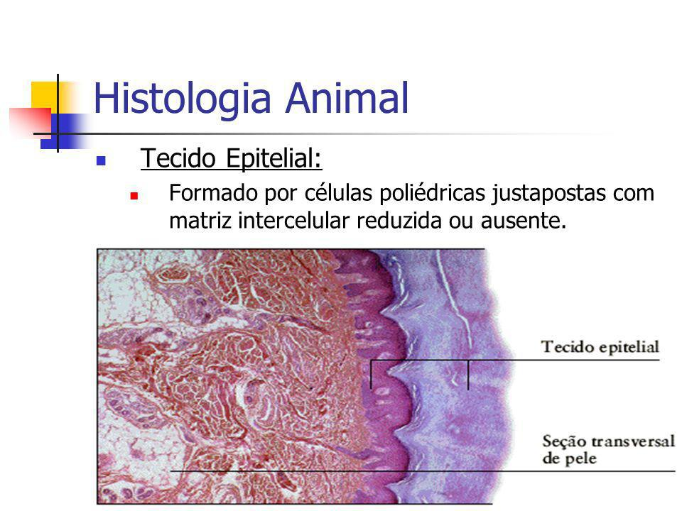 Histologia Animal Tecido Epitelial: