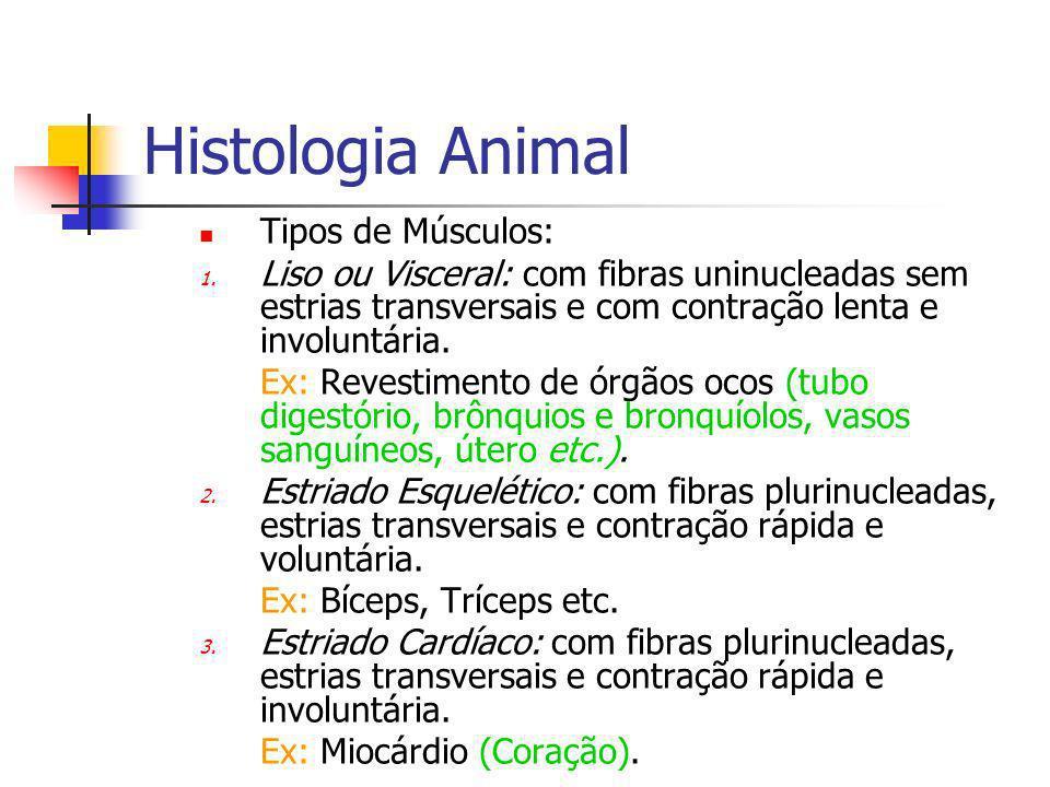 Histologia Animal Tipos de Músculos: