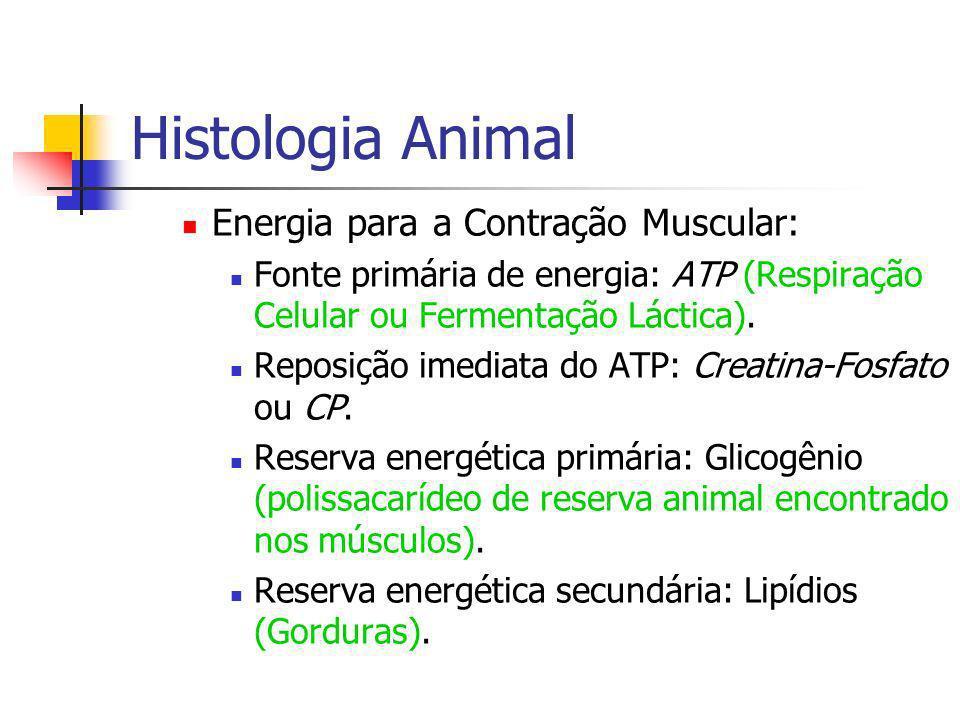 Histologia Animal Energia para a Contração Muscular: