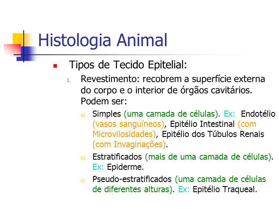 Histologia Animal Tipos de Tecido Epitelial: