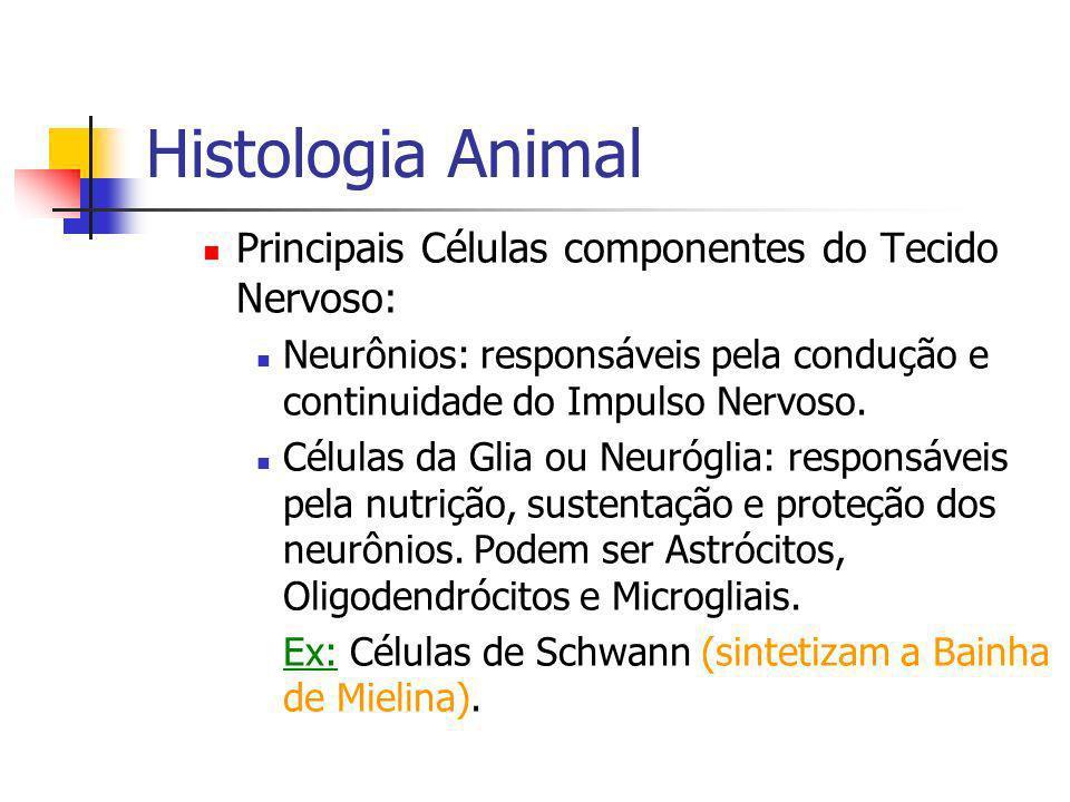 Histologia Animal Principais Células componentes do Tecido Nervoso: