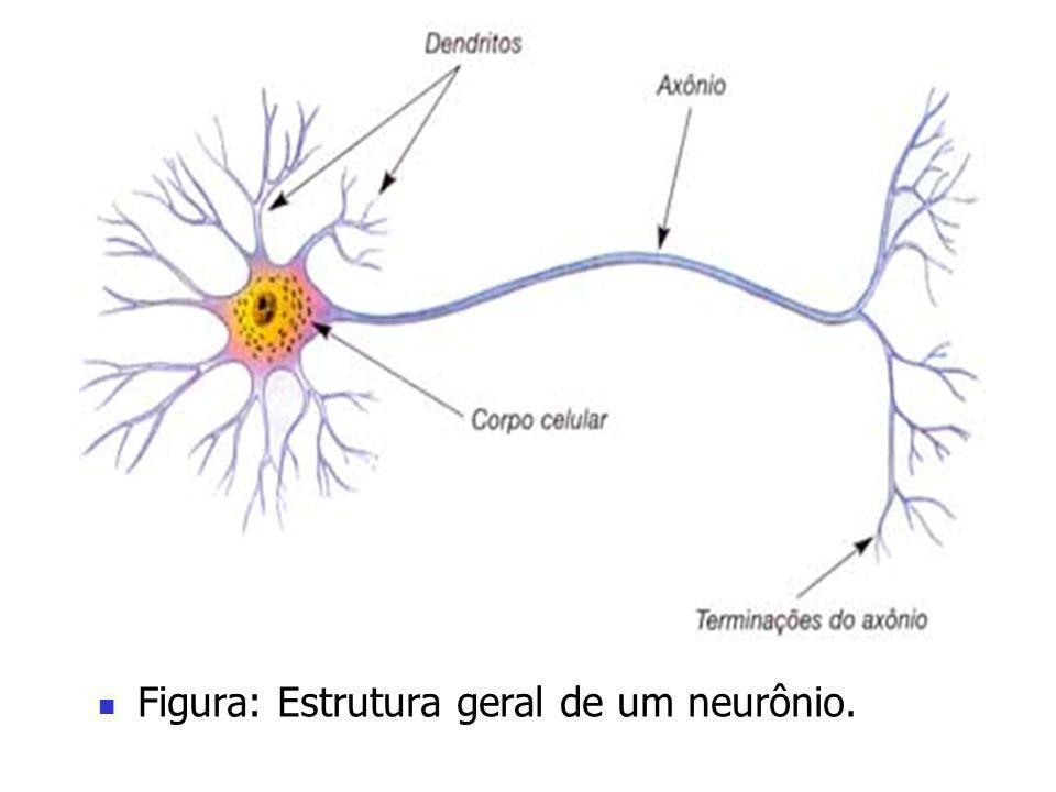 Figura: Estrutura geral de um neurônio.