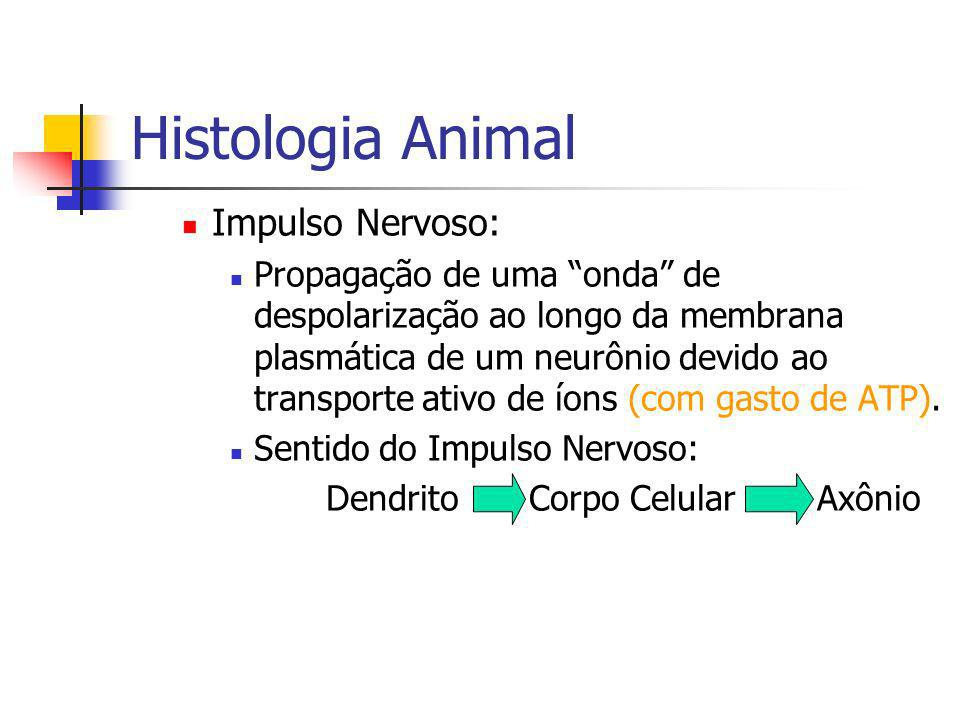 Histologia Animal Impulso Nervoso: